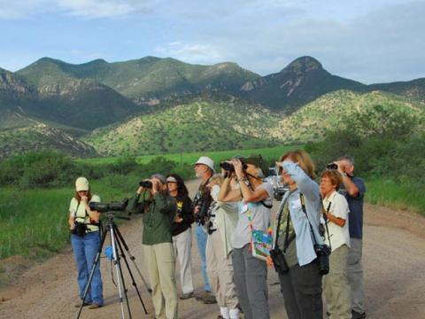 Observation de la faune lors du Southeast Arizona Birding Festival à Tucson