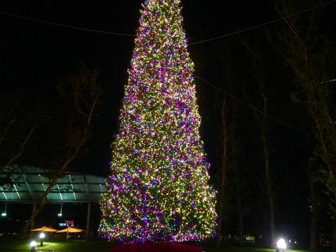 Le sapin de Noël habillé de son manteau de lumières au Town Center Park