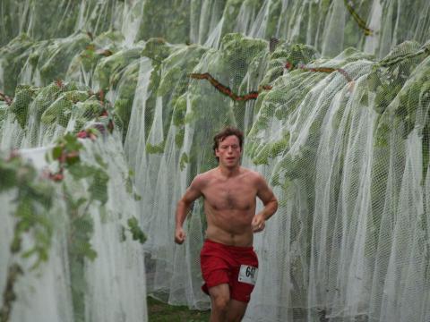 Course à pied à travers les vignes lors de la Harvest Stompede