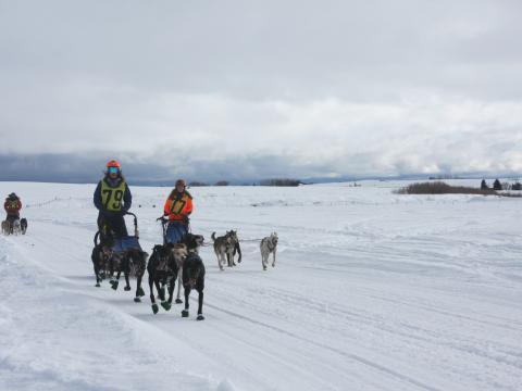 Des participants à l'American Derby Dog, une course de chiens de traîneau, en Idaho